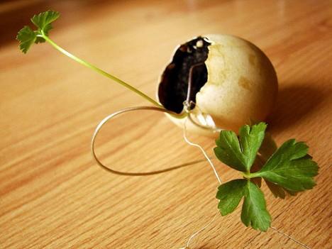 Eggshell-Seedling