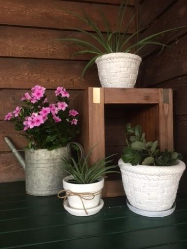 garden-pot-vignette