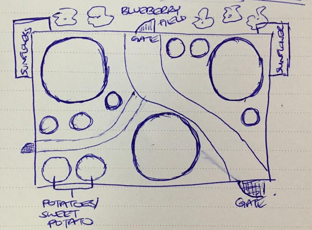 veggie-garden-desing-layout-3